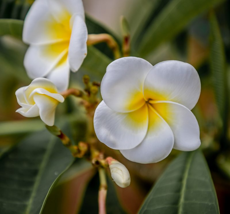 11-botanico-133